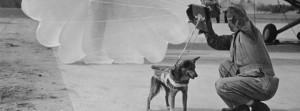 Cães paraquedistas www luchiari com br